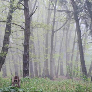 Polski las