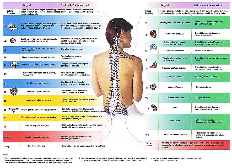 disturbi della colonna vertebrale e organi, migliori cure chiropratiche a Torino