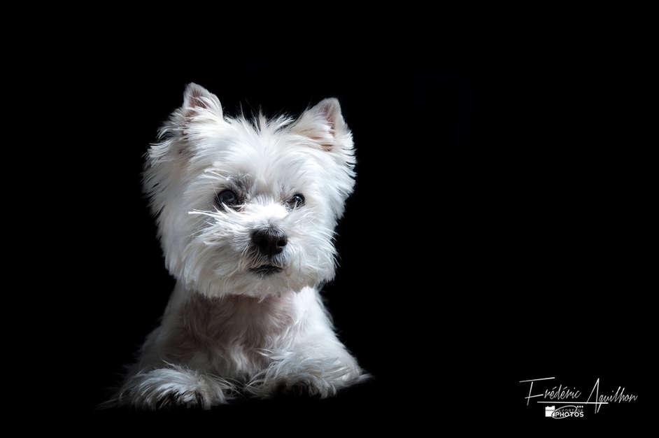 chien-photo-nice