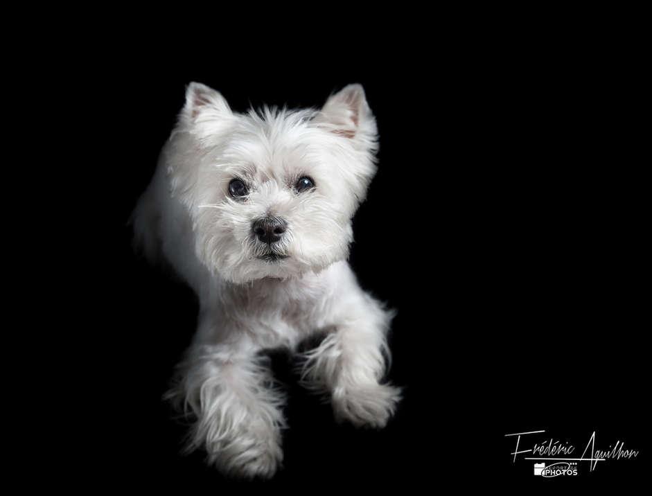 seance-photo-chien-1