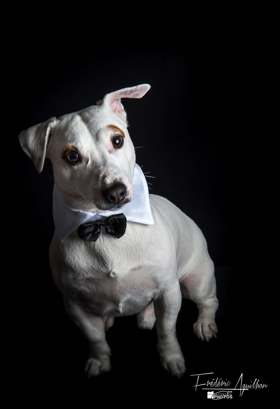 jack-russell-chic