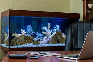 Desk and Aquarium.png