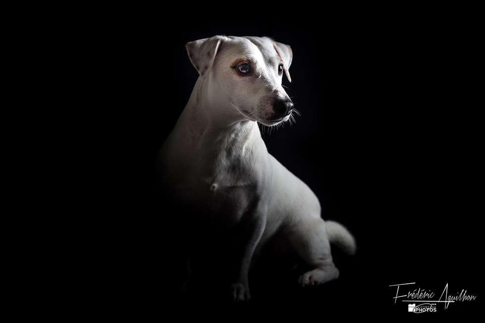 photo-chien-nice