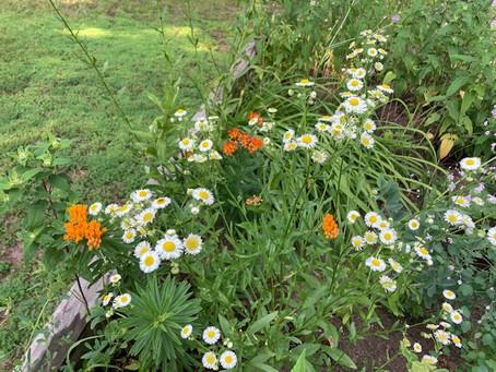 We spent Pollinator Pride week enhancing the Watchung Garden!
