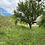 Thumbnail: TG-09 - Bauernhof m. schönen Details - Teilausgebaut - 110 m2 WF - 7000 m Land