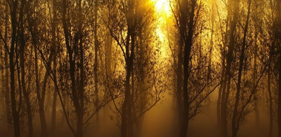 Der Herbst in Ungarn