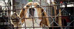 Animal Rescue Farm - Siofok