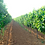 Thumbnail: LT-01 - Etabliertes Familienweingut - Weinkeller zu verkaufen ! 8.5 Hektar Land