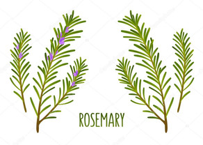 What The Smudge Is Rosemary~The Underdog of The Herbal Cleansers