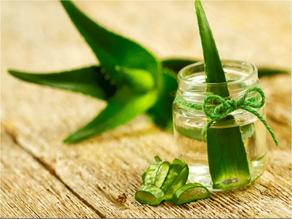 7 Essential Health Benefits of Aloe Vera