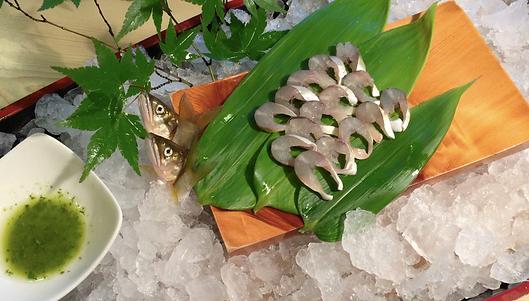 天然鮎専門