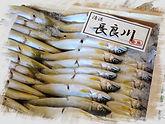 世界農業遺産の天然鮎_Fotor.jpg