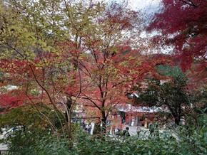 3連休をつかって紅葉を見に高尾山にいってきました。