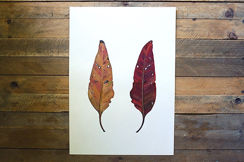 'Reflections' Cotton Rag Print