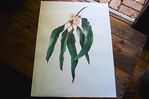 'Falling Eucalyptus' Cotton Rag Print