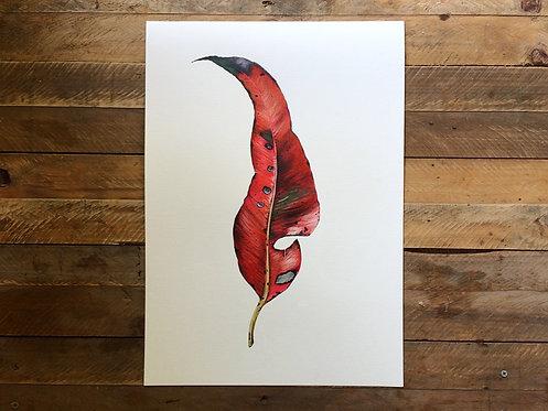 'Scarlet' Cotton Rag Print