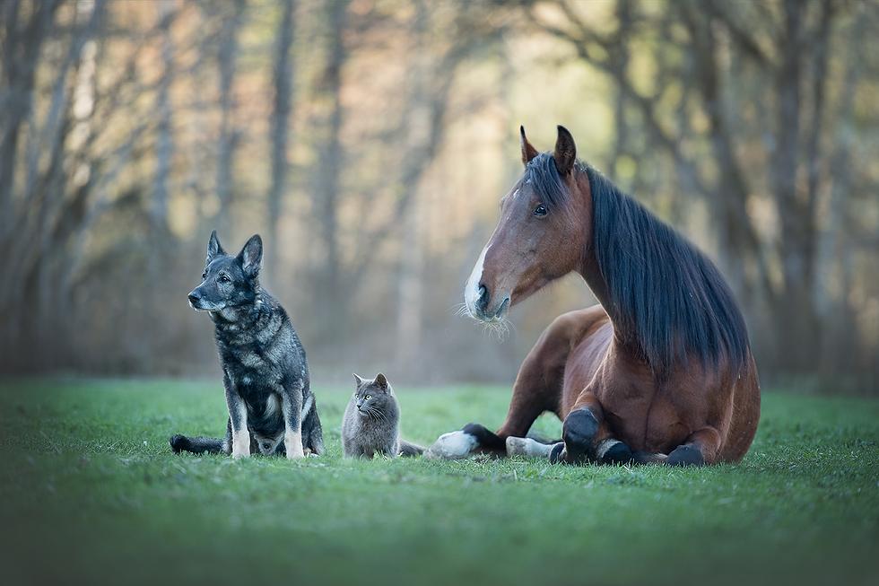 Shiatsu_Pferd_Hund_Katze.png