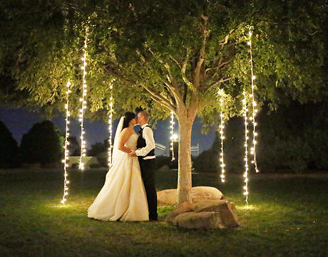 Magical Tree Wedding Lighting Rental