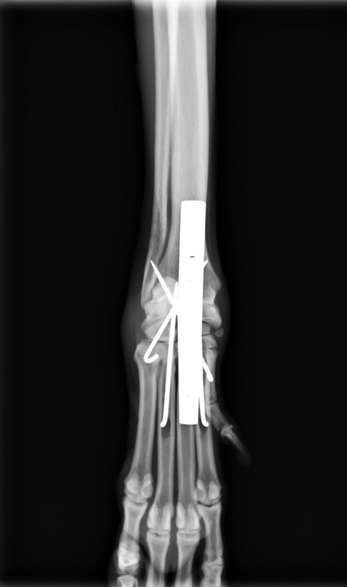 手根関節脱臼3