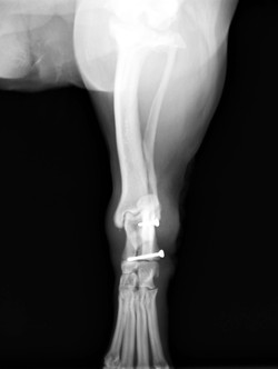 足根関節脱臼3