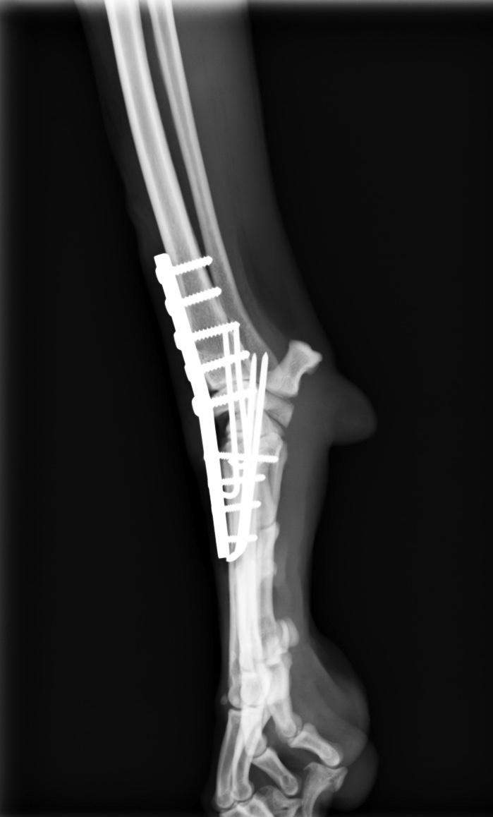 手根関節脱臼2