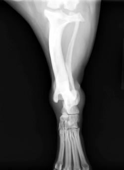 足根関節脱臼2