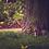 Thumbnail: Egern