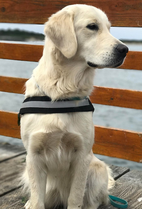 Lilu service dog