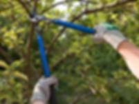 Pruning-picture-compressor.jpg