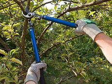 Pruning-picture-compressor.jpg