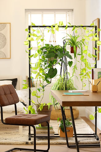 Furniture And Choice, DIY Plant Room Div