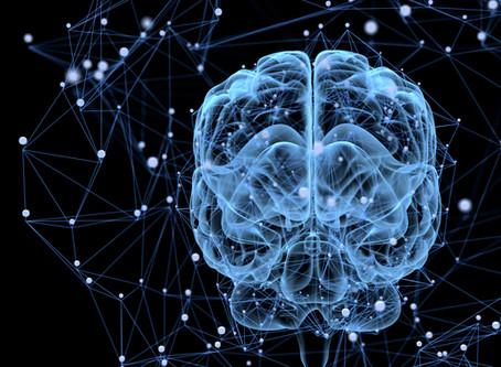 La hormonas y el cerebro