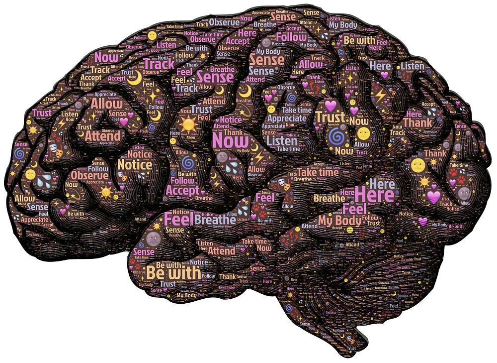 cerebro dinámico