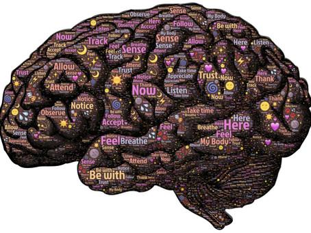 El cerebro dinámico