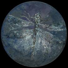 GC16 Dragonfly 4