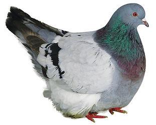 Elevage plume et poil cazouls les beziers : Mondain