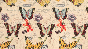 HISTORY BUTTERFLY