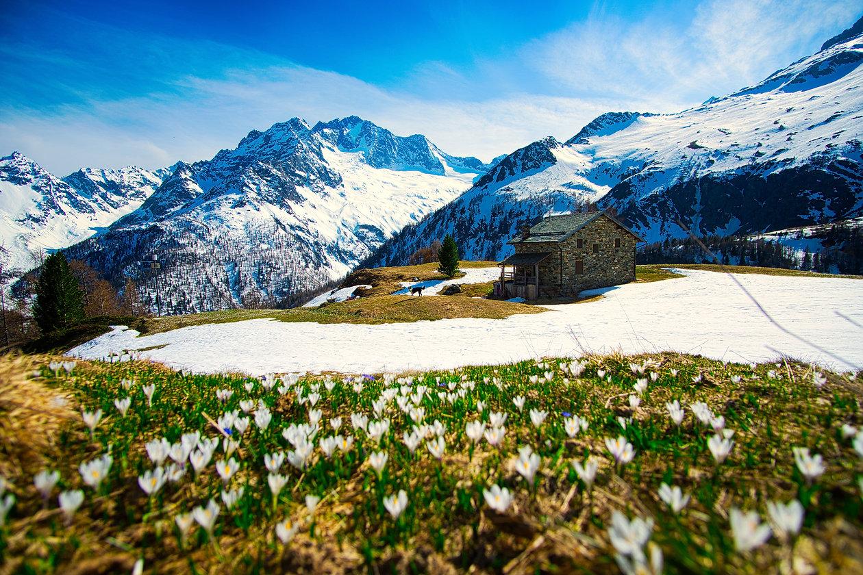 Alpe dell'oro_3.jpeg