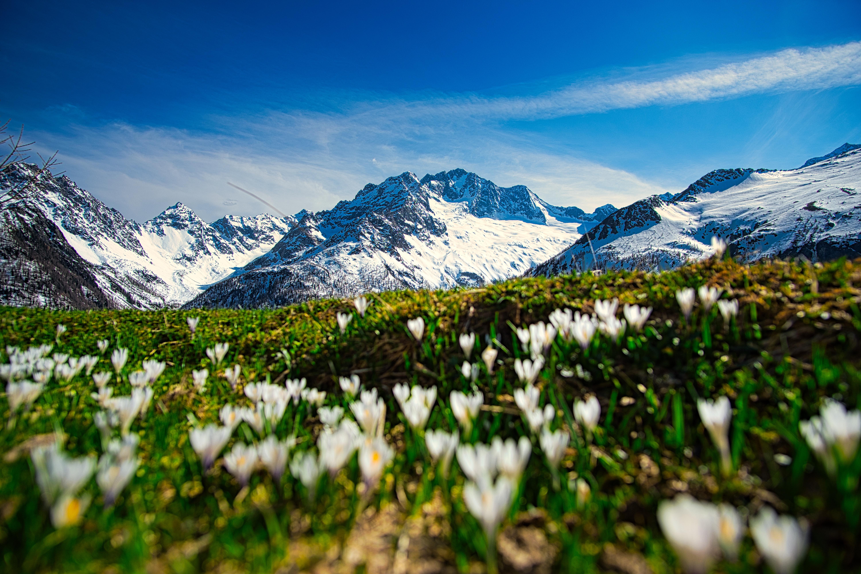 Alpe dell'oro spring