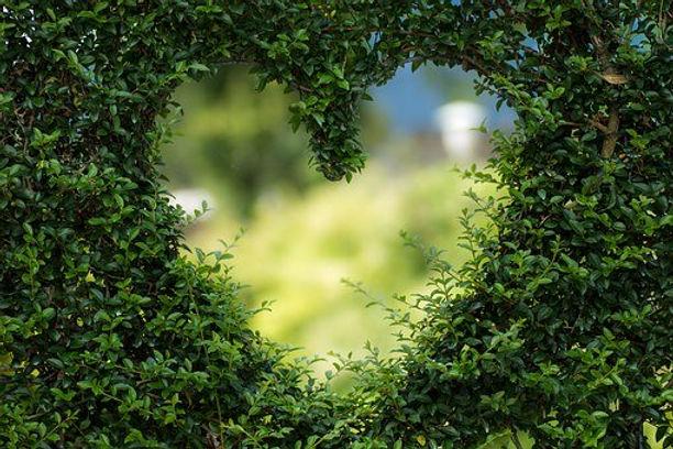 Hedge - heart-1192662__340.jpg