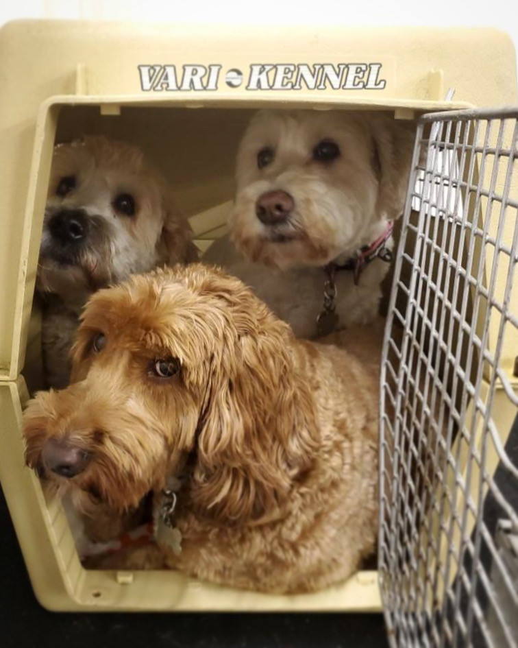 Three cute dogs in a kennel