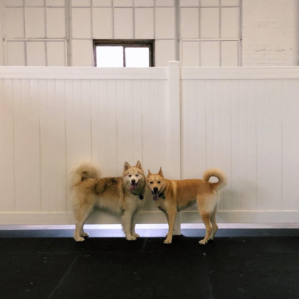 Xander & Gunther at Good Dog