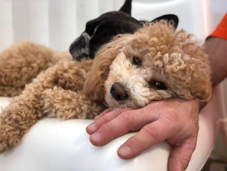 COVID-19/CORONAVIRUS UPDATE FROM GOOD DOG