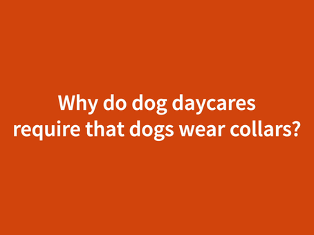 WHY DO DOG DAYCARES REQUIRE COLLARS?