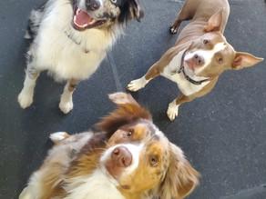 DOGS DON'T WEAR BIKINIS