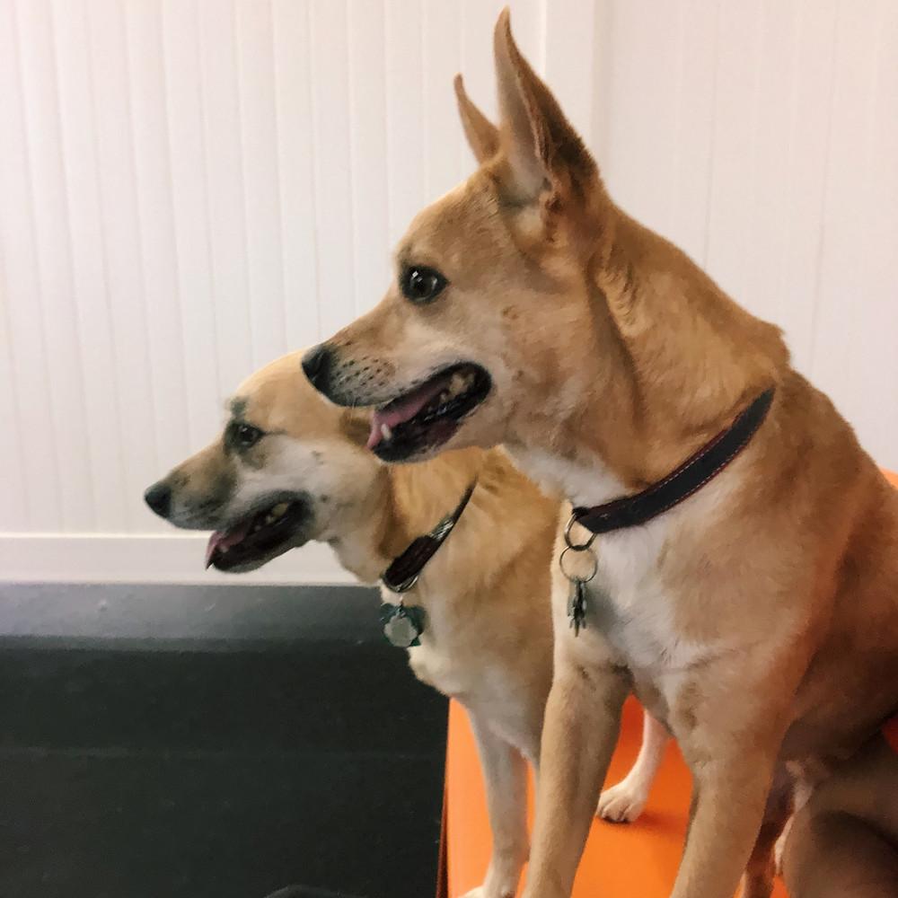 Kaia & Tully at Good Dog