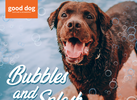 CELEBRATE THE END OF SUMMER WITH BUBBLES AND SPLASH!