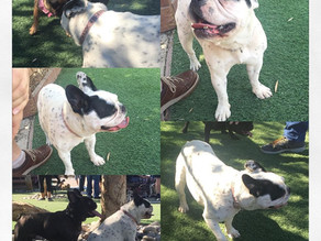 IS THE DOG PARK BEST FOR SOCIALIZATION?