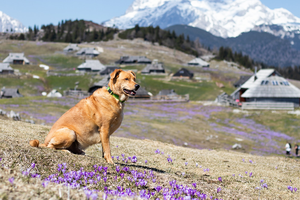 Dog in the mountains.