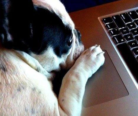 Camp Crockett Seattle Trolls Facebook Fans of Good Dog